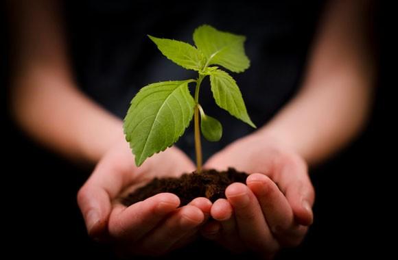 Cal Verde e Sustentável